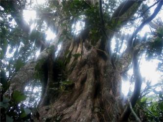 Đa dạng thực vật ở Vườn quốc gia Phong Nha - Kẻ Bàng